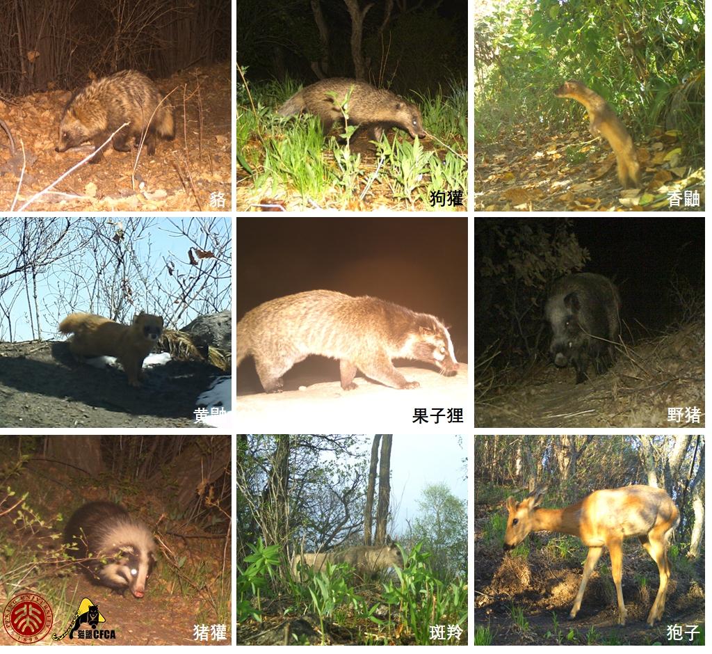 9-mammals